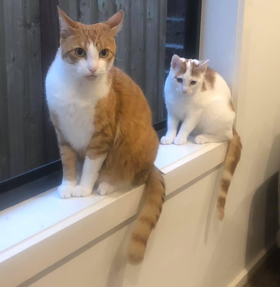 Ronald and Ed on windowsill