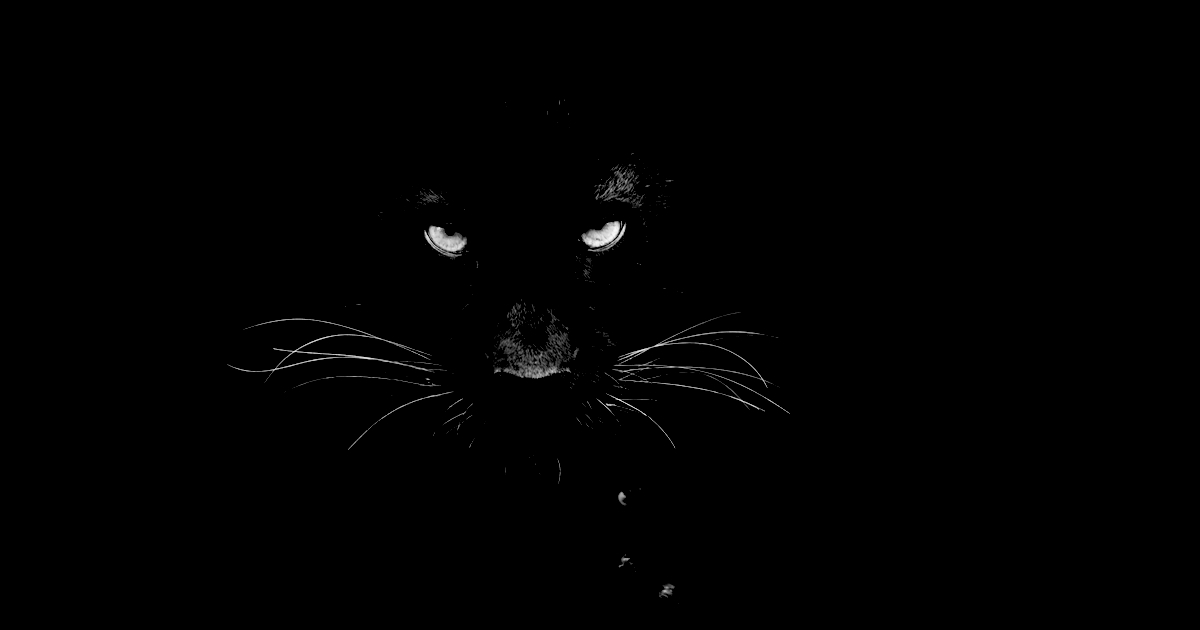 giant black cat panther melbourne